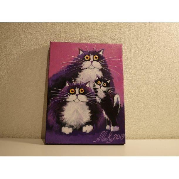 Søte katter nr. 1